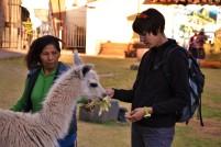 turistická atrakce - krmení lam a alpak