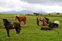 všudypřítomní koně
